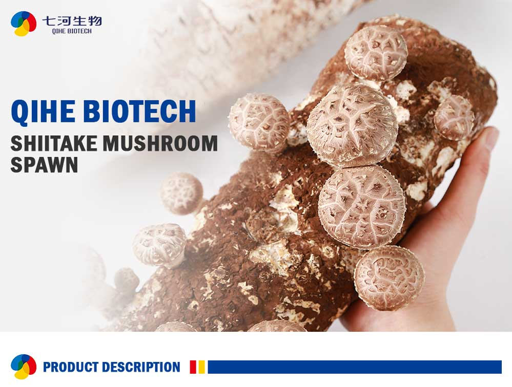 Artificial Mushroom Cultivation