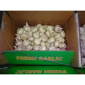 Sale 2019 Normal White Garlic