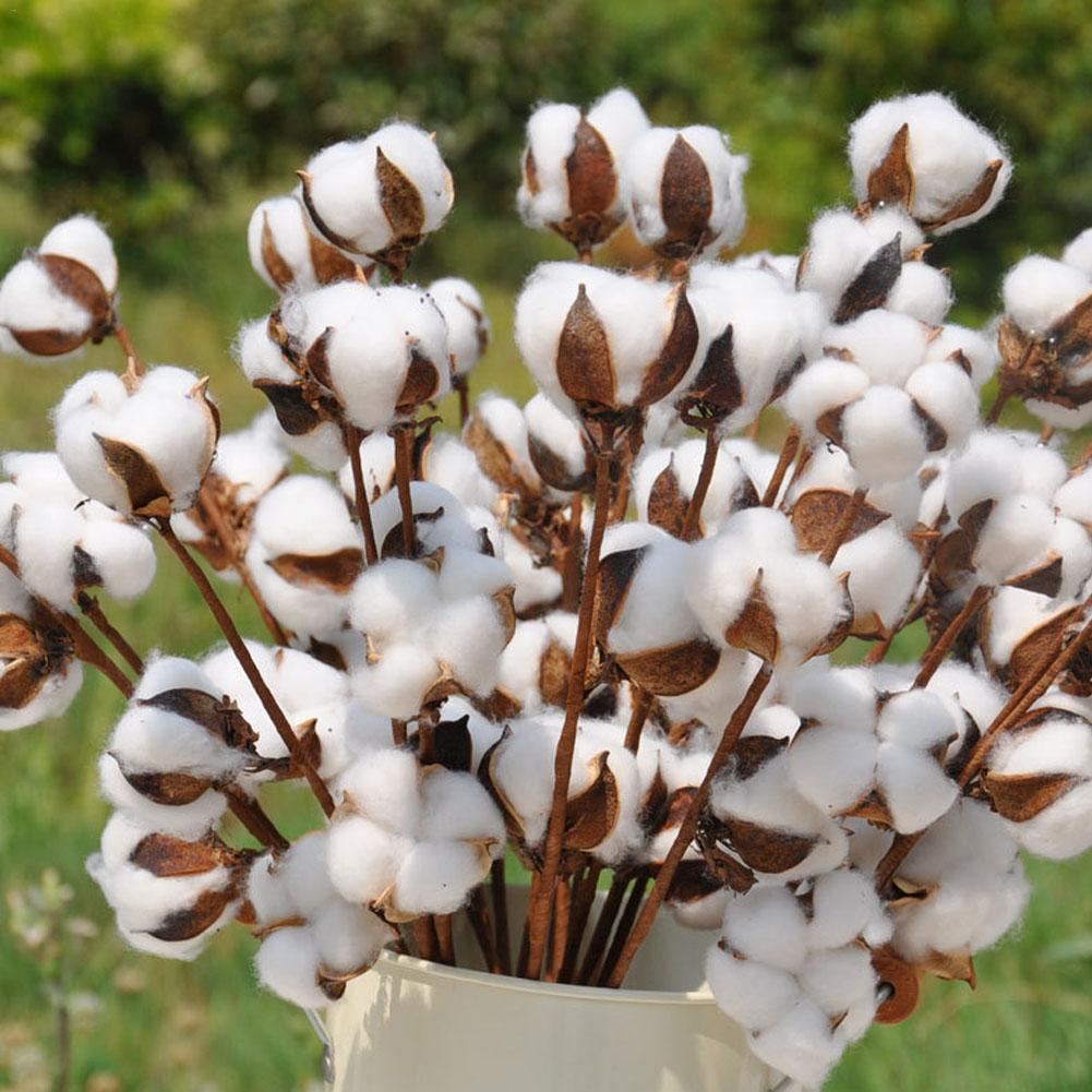 10Pcs Naturally Dried Cotton Flower Artificial Plants Floral Short Branch For Wedding Party Decoration Fake Flowers Home Decor