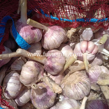 2019 Best Fresh Natural Garlic Price