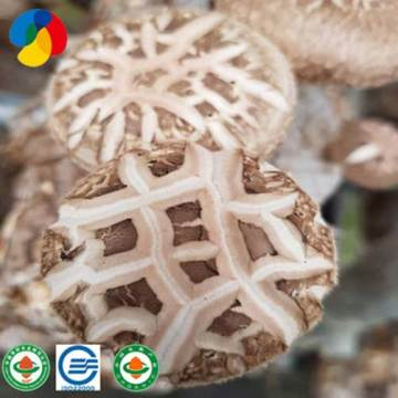 Healthy And Beneficial Fresh Shiitake Mushrooms