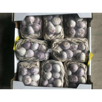 Single clove garlic for export