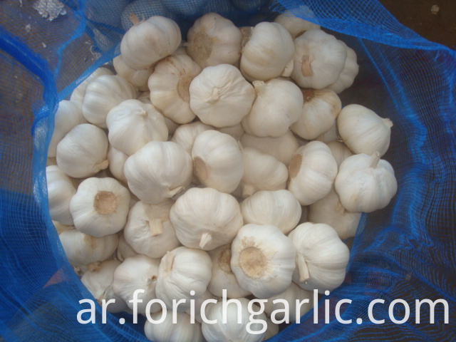 Pure White Garlic