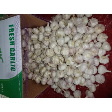 Hot Sale 2020 Normal White Garlic