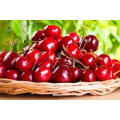 100% pure natural cherry fruit extract