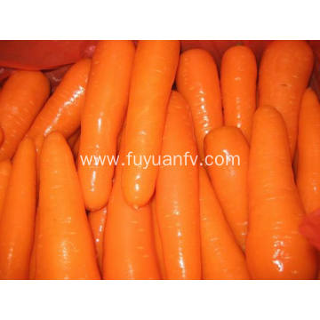 Fresh Carrot L size