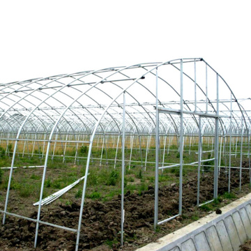 Large 10m Tunnel Plastic Film Greenhouse