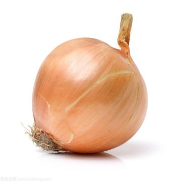 New crop for wholesale onion