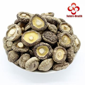 Dried Shiitake Mushrooms Premium Organic Grown Mushrooms Natural Food Fungus