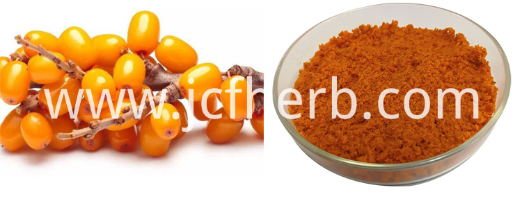 Freeze-dried seabuckthorn Powder