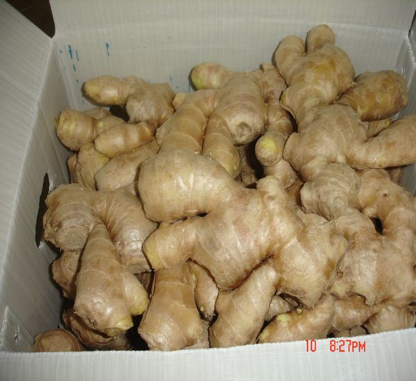 Super Quality Air Dried Ginger to South Africa Mkt