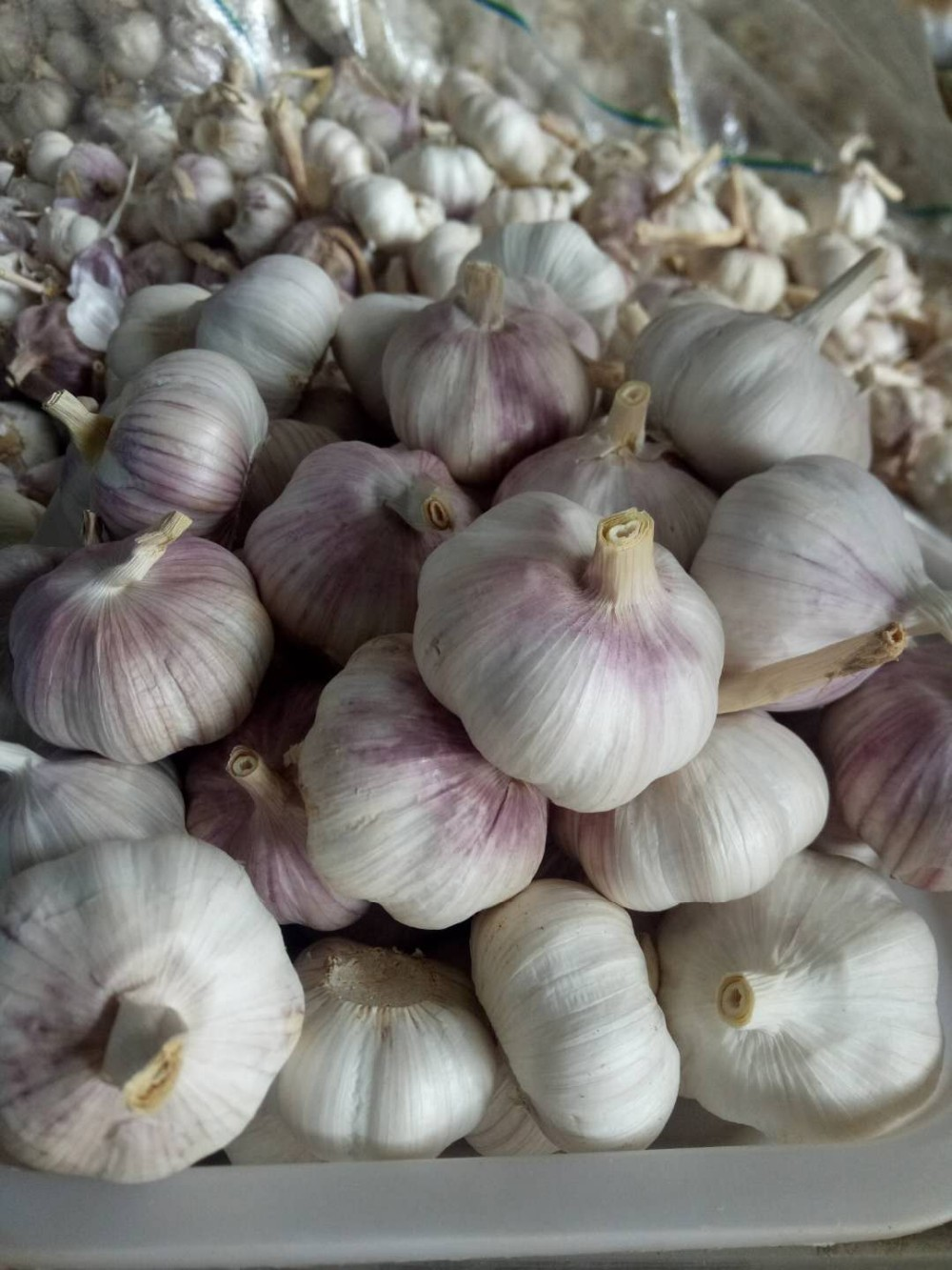 The cheapest and The smallest of garlic